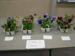 NC Sectionals plant entry