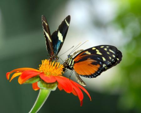 11_BoDSenior_Real Social Butterflies_Carina_San Joaquin