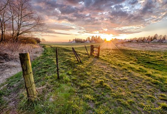 BOS_Sunset-On-The-Pasture_Santa-Clara