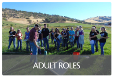 Adult Roles